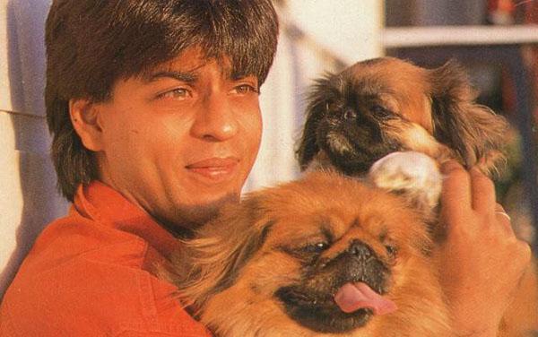 Sidharth Malhotra S Dog Oscar Breed