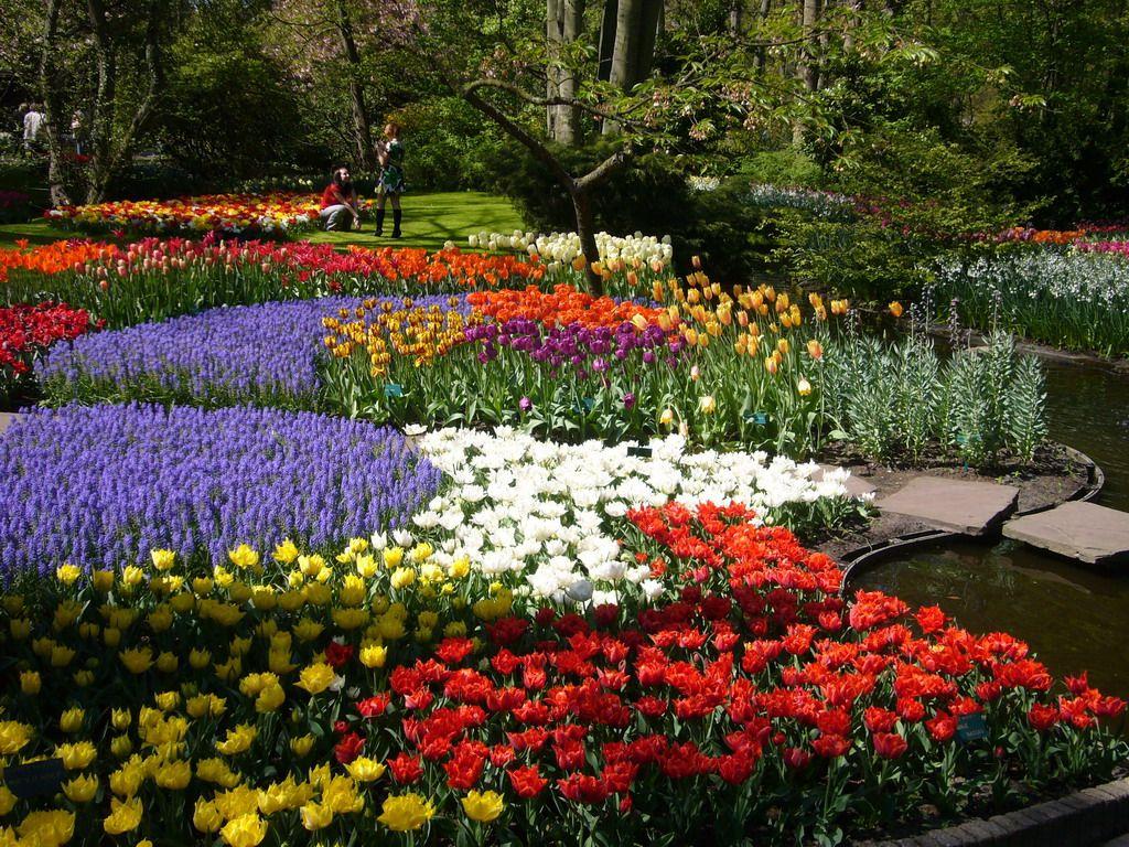 नीदरलैंड के किकन हॉफ गार्डन में टूलिप फूल