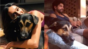 Farhan Akhtar posts new picture of girlfriend Shibani Dandekar, but she shares his heart with this one!