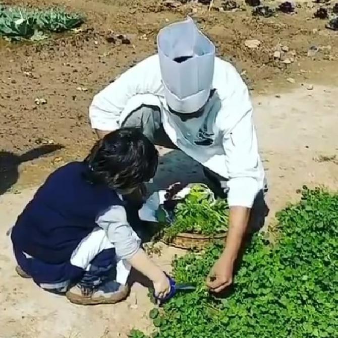 Taimur Gardening